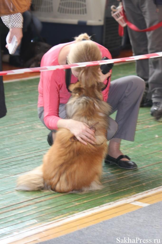 Проведение выставки собак