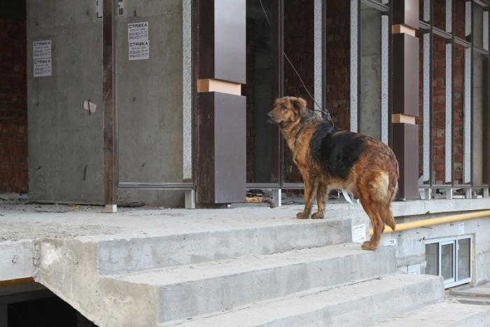 ВДагестане после погибели девушки устроили массовый отстрел собак