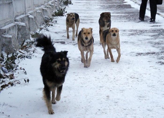 Картинки по запросу правила поведения с бродячими собаками