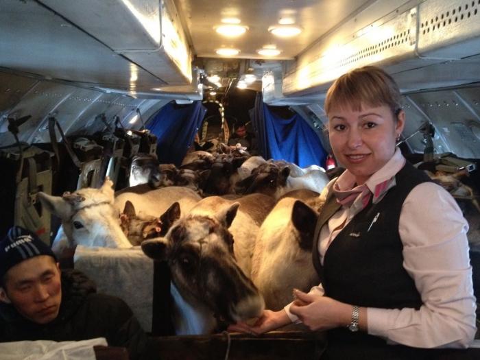 Информацию о погибели оленей вЯкутии опровергли