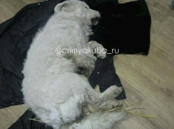 Гражданин Якутии облил собаку водой иоставил умирать на50-градусном морозе
