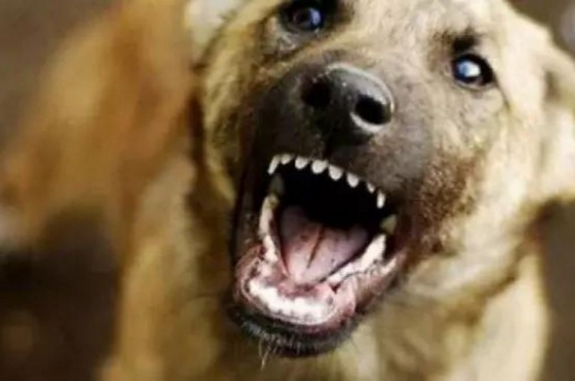 ВНамском районе Якутии стая собак напала наребенка. Девочка— вреанимации