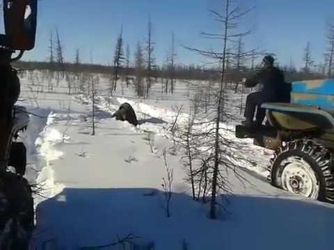 ВЯкутии вахтовики, переехавшие медведя на«Уралах», пойдут под суд
