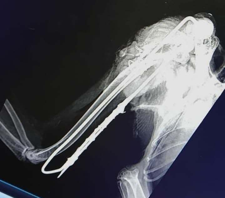 В центре Якутска неизвестные жестоко покалечилиполярную сову