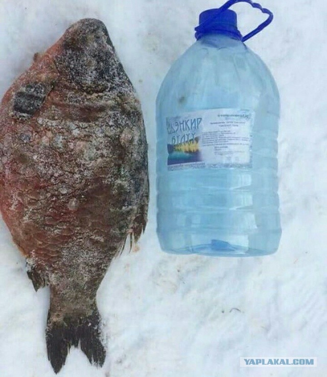 охота и рыбалка в риге